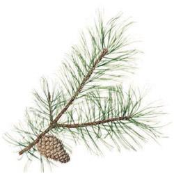 pinen