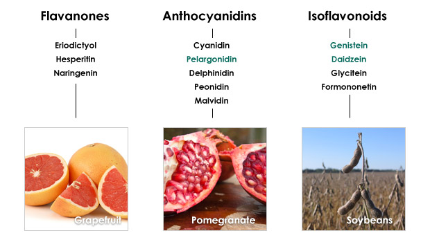 articles-flavonoids_text_3